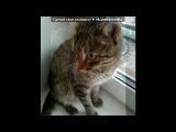«Моё солнышко!!!» под музыку Детская  песня - Песенка про котенка. Picrolla